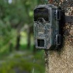 Best 15 Game & Trail Cameras For The Money Reviews & Guide