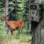 Best 5 Cheap & Budget Game Trail Camera Pick In 2020 Reviews
